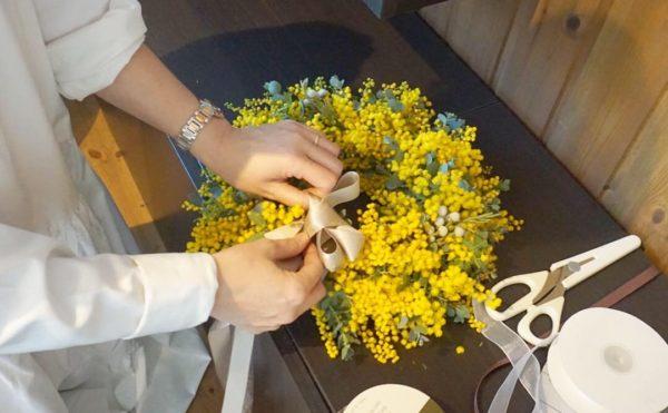mimosa lesson